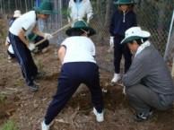植栽 (和歌山県田辺市)    地元の田辺市立三川小学校との共同作業