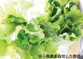 自ら無農薬栽培した野菜