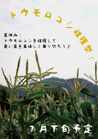 トウモロコシ収穫祭!