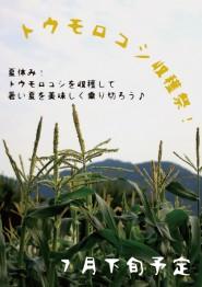 トウモロコシ収穫祭