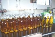 菜の花まつり菜種油完成