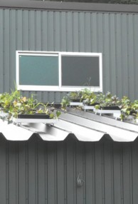 屋上屋根裏緑化