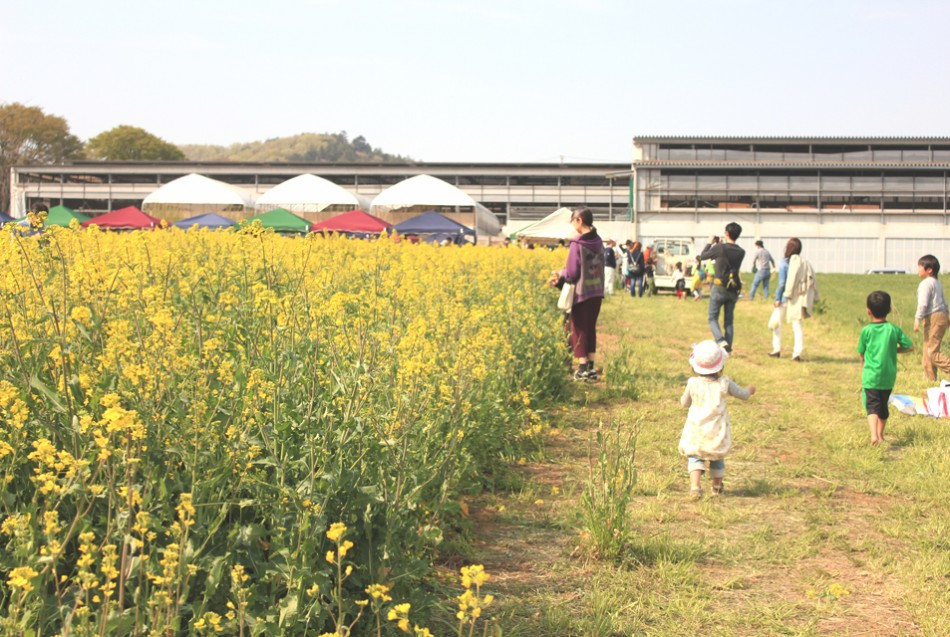 今年も4月の第二土曜日に、愛川町にて菜の花まつりを開催致し ...