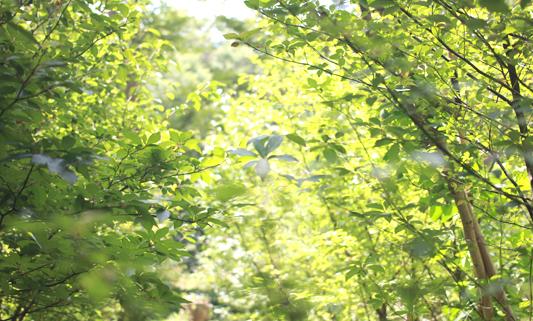 黒文字の森