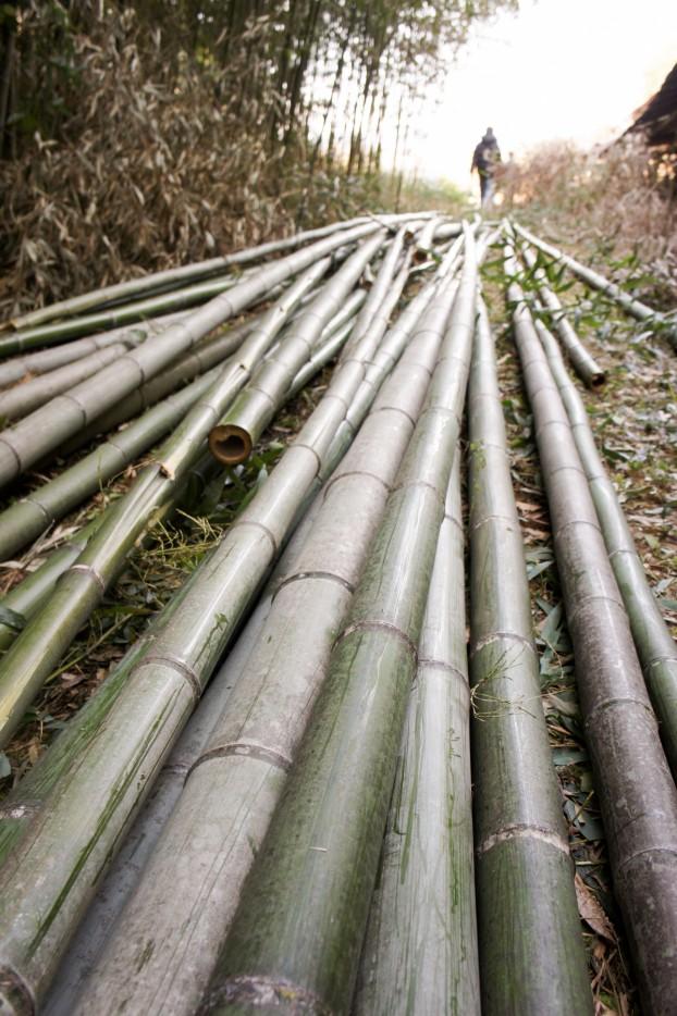 「竹を使って創る夢の住まい創りアート」一緒に参加しませんか? 竹アート