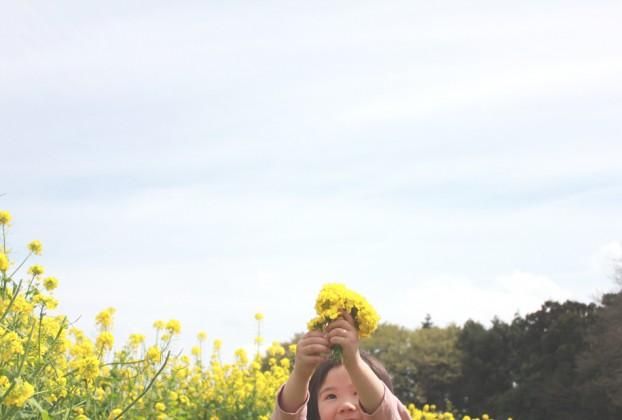 菜の花まつり