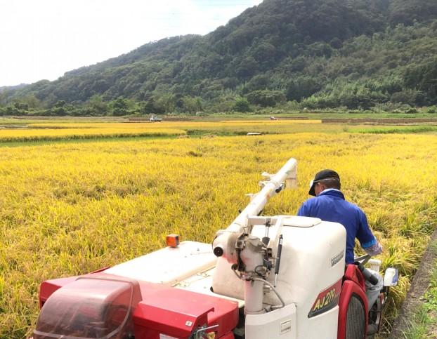 無農薬無化学肥料のお米